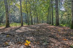 Forest path on a sunny day. Single fallen leaf on a forest path on a sunny day in autumn Stock Image