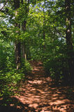 Forest path in sunny day Stock Photos