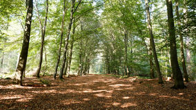 Forest path on a sunny september afternoon (Almelo, The Netherlands). The path lies in the Nijrees forest at the edge of Almelo in the Eastern Netherlands Royalty Free Stock Photography