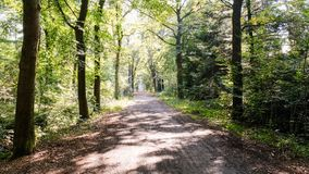 Forest path on a sunny september afternoon Almelo, The Netherlands. The path lies in the Nijrees forest at the edge of Almelo in the Eastern Netherlands stock images