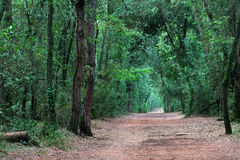 Forest Walking Path Stock Images