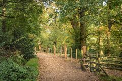 Forest path at sunset stock photo