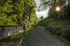 Forest path at sunset Royalty Free Stock Photos