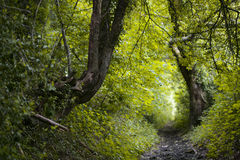 Forest Path. In Surrey hills, England, UK Stock Image