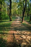 Forest path surrounded by fresh green spring colors stock photo