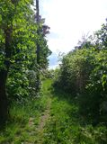 Forest path surrounded by a lush vegetation. Photo of a forest path surrounded by a lush vegetation Stock Photography
