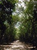 Forest Path Surrounding Coba Mayan-Plaats royalty-vrije stock afbeeldingen
