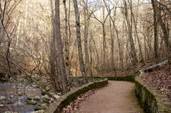 A Forest Path. Taken in the winter, The path leading to the Blanchard Springs Mouth Royalty Free Stock Images