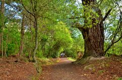 Forest Path, Taupo, New Zealand Stock Photos
