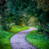 Forest path. Forest tiny path in summer morning Royalty Free Stock Photo