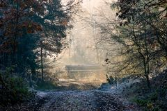 Forest path to the clearing with wood pile royalty free stock images