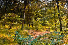Forest path to Mlynaruv Kamen view in Czech central mountains tourist area in sommer sunset Royalty Free Stock Photography