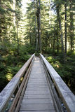Forest path trail bridge wood royalty free stock image