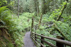 Forest path trail royalty free stock image