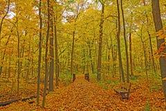 Forest Path tranquille en automne Photographie stock