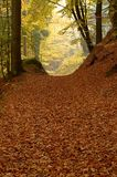 Forest path with a tree Royalty Free Stock Photography
