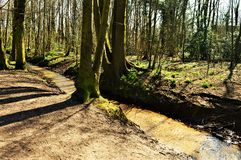 Forest path and tree trunks. Beautiful landscape with a forest path and tree trunks. Romantic image and landscape Stock Photo