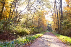 Forest Path with Trees Arched over Trail in Evening. A dirt bike or walking path in the woods, under an archway of maple trees on a sunny fall evening royalty free stock images