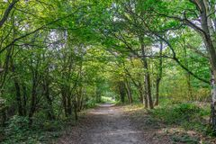 Forest path with trees lining in Essex, England. royalty free stock photo