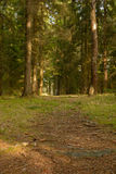 The forest path with trees Stock Photo