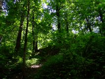 Forest path among the trees in summer stock photo