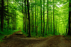 Forest path with two ways. To go stock photography