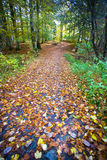 Forest path with typical autumn colors Royalty Free Stock Images