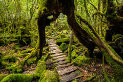 Forest path under Stock Photos