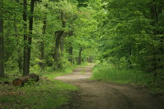 Forest path v3. A path in the forest in mid-summer Royalty Free Stock Photos