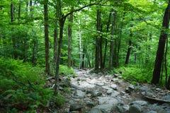 Forest Path verde luxúria Imagem de Stock