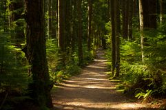 Forest Path. Walking down a forest path in North Vancouver, BC, Canada Royalty Free Stock Image