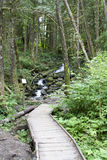 Forest path mountain trail  Royalty Free Stock Photography