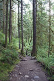Forest path mountain trail Stock Photography
