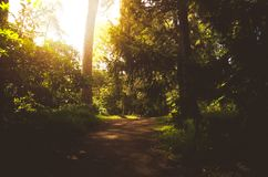 Forest path. Warm sunset in a wood stock images
