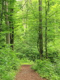 Forest path Stock Image