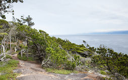 Forest path on west coast near Victoria, BC Royalty Free Stock Image
