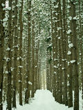 Forest path in winter stock image