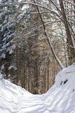 Forest path in winter Stock Photo