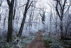 Forest Path in winter Royalty Free Stock Images