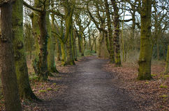 Forest Path. A forest path in winter stock image