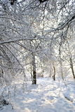 Forest path in winter Stock Photography