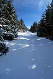 Forest path in winter Jeseniky mountains with blue sky Royalty Free Stock Photography