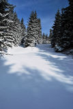 Forest path in winter Jeseniky mountains with blue sky Stock Image