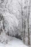 Forest path in winter scenery royalty free stock photography