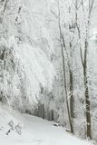 Forest path in winter scenery stock photography
