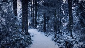 Forest Path In Winter With Snow Falling stock video footage