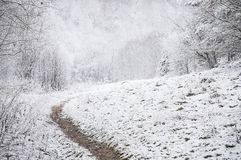 Forest path in the winter Royalty Free Stock Photos
