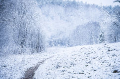 Forest path in the winter Royalty Free Stock Images