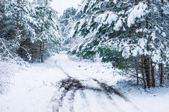 Forest path in the winter Stock Photography