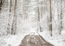 Forest path in the winter Stock Images